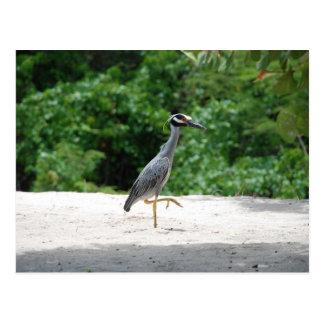 Heron stalking along a beach postcard