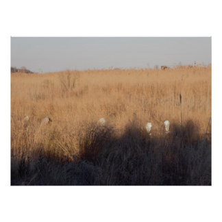 Herons Hiding in the Grass at the Refuge Poster