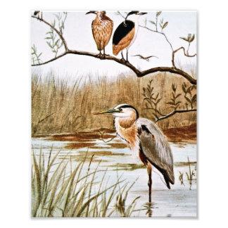 Herons Vintage Art Art Photo