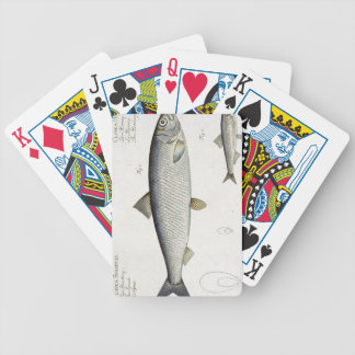 Herring (Clupea Harengus) (Fig. 1) and Sprat (Clup Bicycle Playing Cards