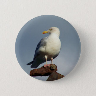 Herring Gull Charlestown Harbour Cornwall England 6 Cm Round Badge