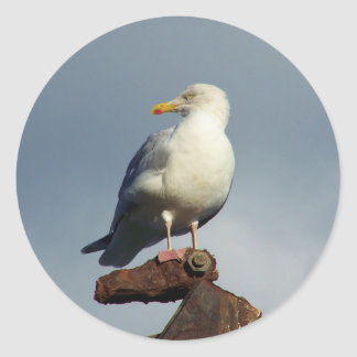 Herring Gull Charlestown Harbour Cornwall England Classic Round Sticker