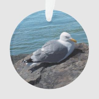 Herring Gull on Rock Jetty