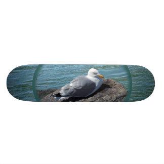 Herring Gull on Rock Jetty 18.1 Cm Old School Skateboard Deck