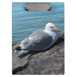 Herring Gull on Rock Jetty Clipboard