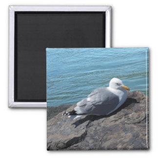 Herring Gull on Rock Jetty Magnet