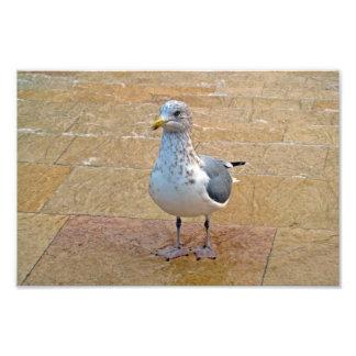 Herring Gull Photo