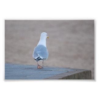 Herring Gull Photo Print