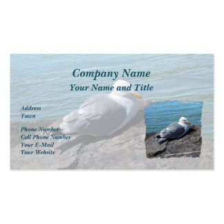Herring Gull Resting on Rock Jetty: Business Cards