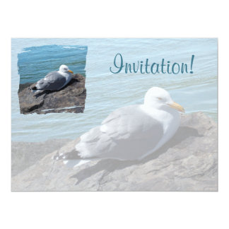 Herring Gull Resting on Rock Jetty: Card