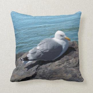 Herring Gull Resting on Rock Jetty: Cushion