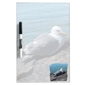 Herring Gull Resting on Rock Jetty: Dry Erase Board