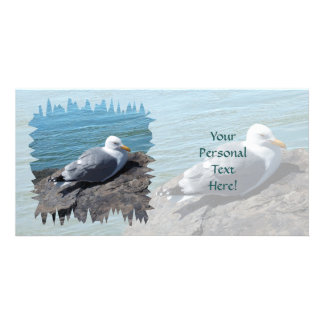 Herring Gull Resting on Rock Jetty: Photo Card Template
