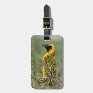 Heuglin's Masked Weaver, Ngorongoro Conservation Tags For Luggage