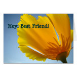 Hey Best Friend! cards Orange Poppy Flowers Card
