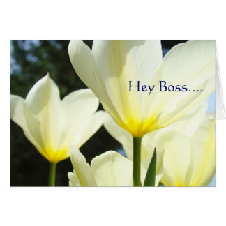 Hey Boss MERRY MERRY MERRY Christmas to You! Greeting Cards