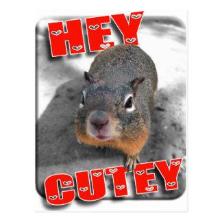 Hey cutey funny squirrel post cards