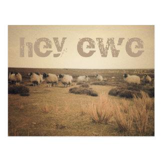 Hey ewe (sheep on moors) postcard