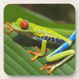 hey little green frog drink coasters