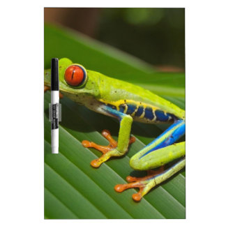 hey little green frog Dry-Erase whiteboard