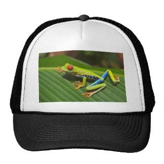 hey little green frog hats