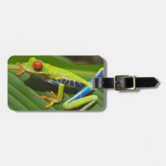 hey little green frog luggage tag