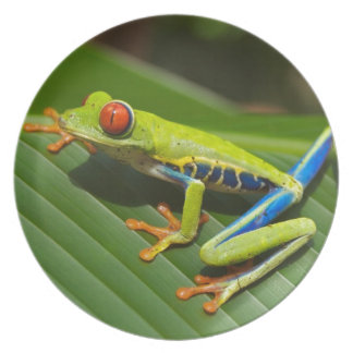 hey little green frog party plates