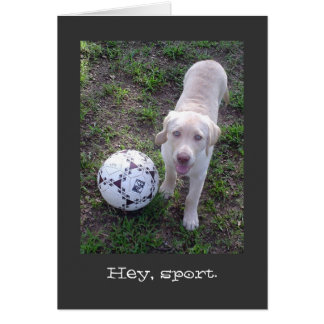 Hey, Sport. Yellow Lab Puppy All Occasion Card