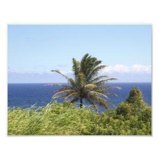 Hi def photography of Coastal Maui, Palm & Ocean Photograph