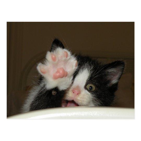"""""""HI"""" Kitten postcard"""