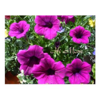 Hi Mom-Petunias for Mom s Special Day Postcards