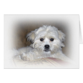 Hi There Faded Shih Poo Puppy Greeting Card