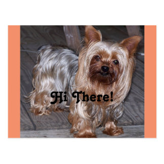 Hi There Yorkshire Terrier Postcard