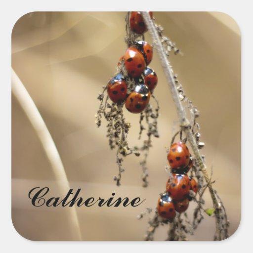 Hibernating Ladybug Cluster name stickers