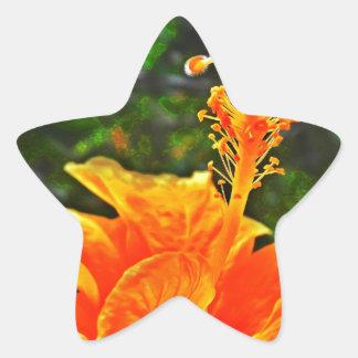 Hibisco Color of orange Star Stickers