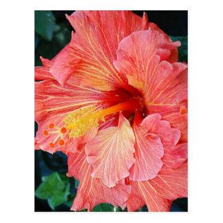 hibiscus 17 postcard