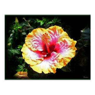 hibiscus 24 postcard