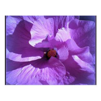 hibiscus 27 postcard