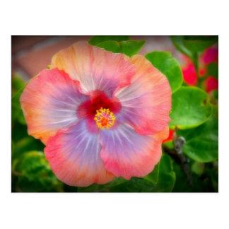 hibiscus 29 postcard