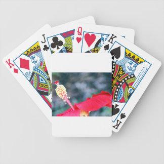 Hibiscus 4 card deck
