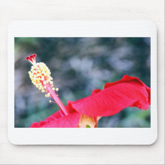 Hibiscus 4 mouse pad