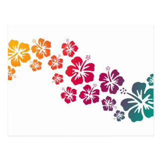 hibiscus blooms coloured postcards