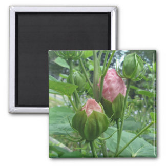 Hibiscus Buds Magnet
