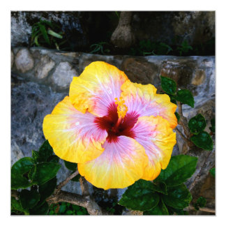 Hibiscus Color Art Photo