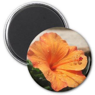Hibiscus - Diversos 6 Cm Round Magnet