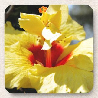 Hibiscus Dryck Underlägg