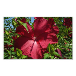 Hibiscus Flower and Blue Sky Tropical Floral Photographic Print
