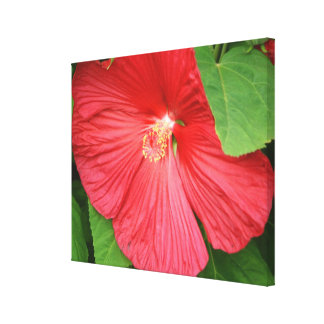 Hibiscus Flower Bright Magenta Floral Canvas Print