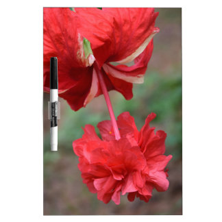 Hibiscus flower dry erase boards