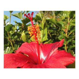 Hibiscus flower custom flyer